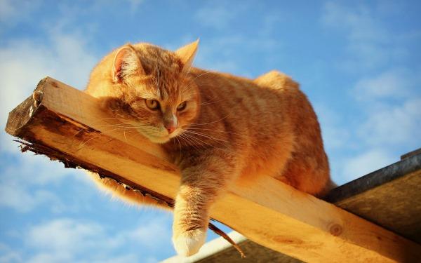 Неврозы у кошки