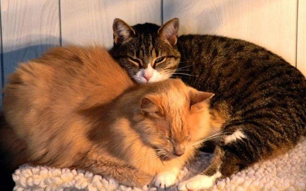 Парез и Паралич у кошки