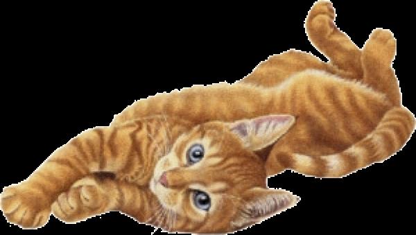 Кровотечения и способы их остановки у кошки
