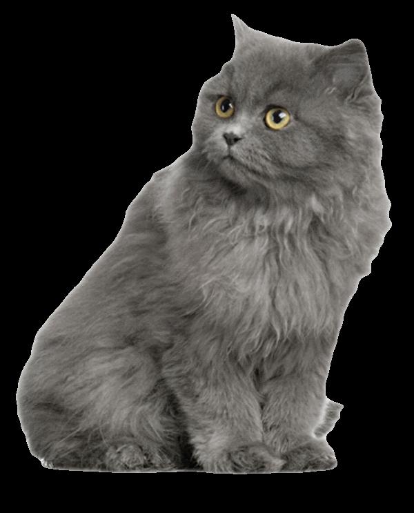 Транспортировка больного или травмированного кота