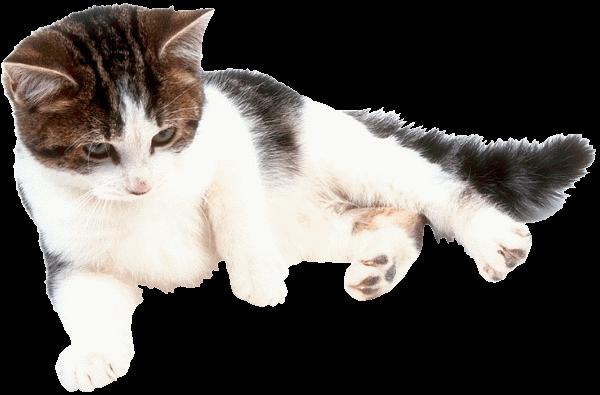 Измерение температуры тела кошки