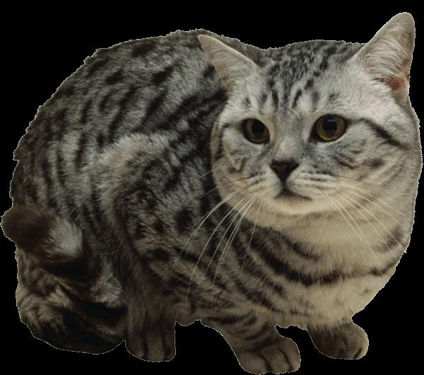 Определение частоты дыхания у кошки