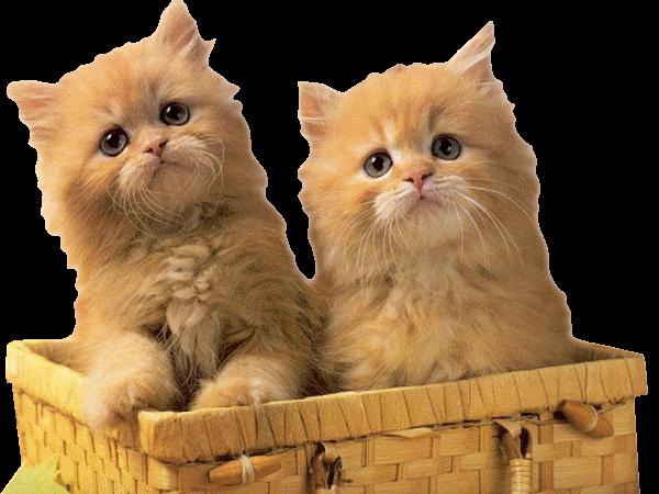 Реанимация у кошек