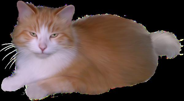 Фитотерапия у кошек