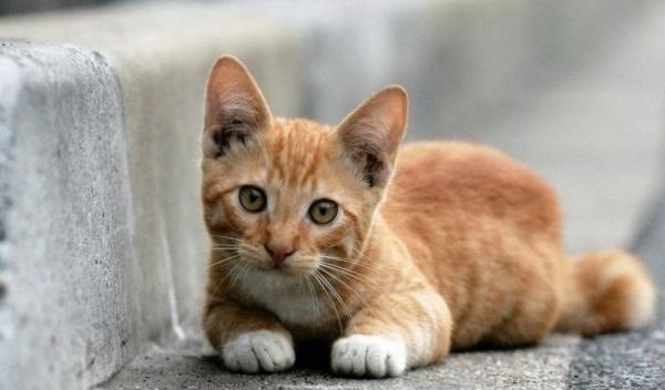 Болезни органов дыхания у кошек