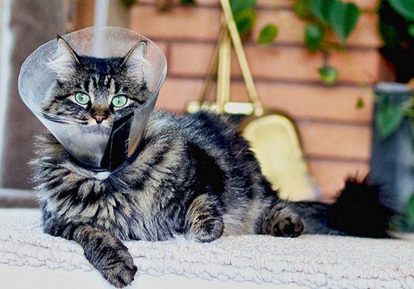 Стоячий воротник для кошки