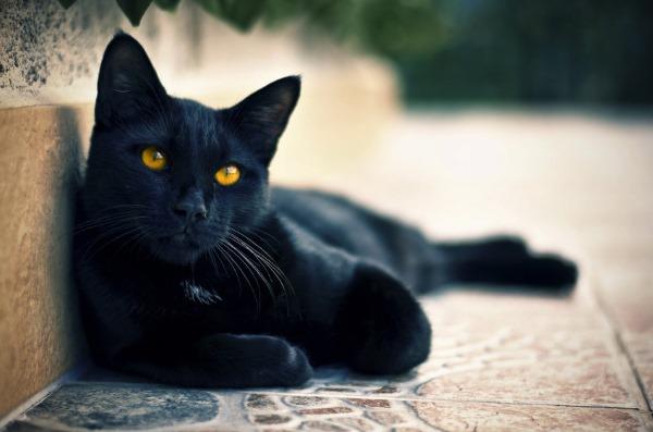 Перитонит у кошки