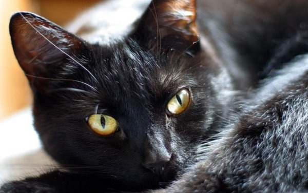 Заболевания кишечника у кошки
