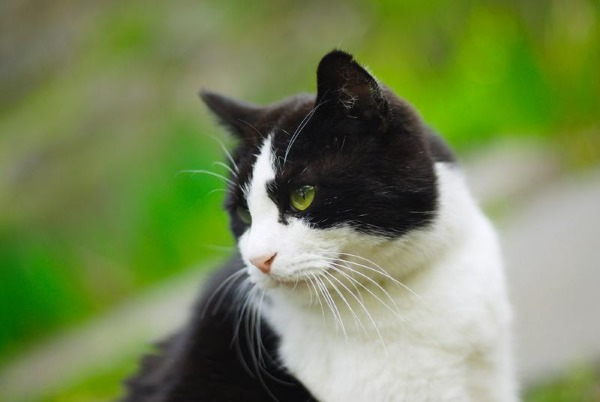 Дисбактериоз у кошки