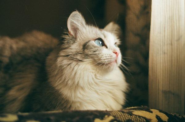 Диарея (понос) у кошек
