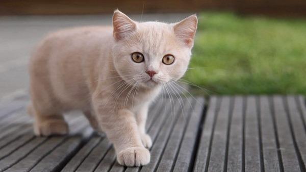 Заболевания печени у кошки