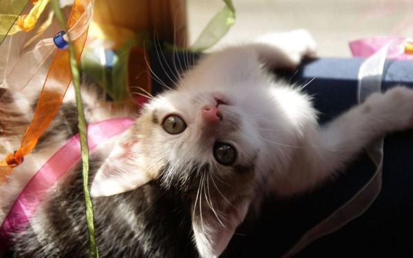 Кошачья лейкемия