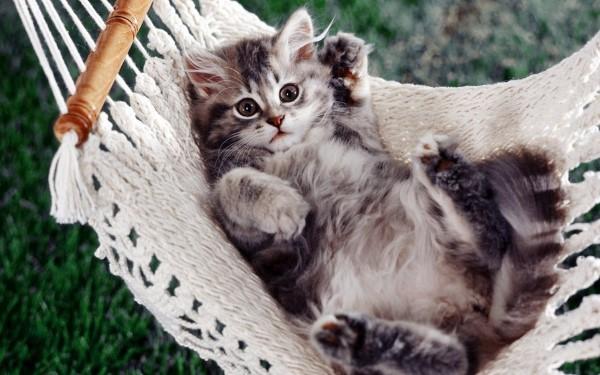 Бруцеллёз у кошек