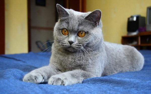 Колибактериоз у кошек