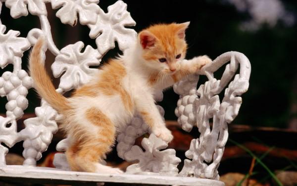 Столбняк у кошек