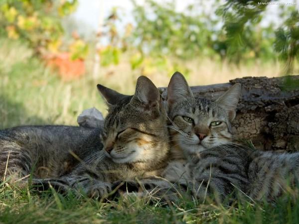 Инвазионные болезни у кошек