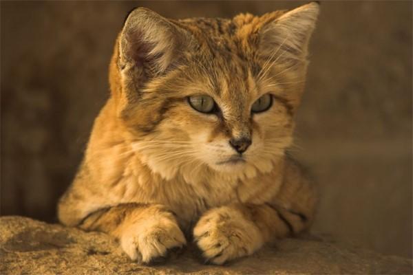 Противоглистные средства для кошек