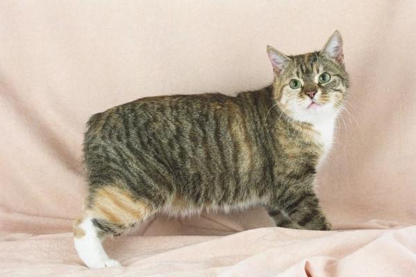 Диарея или понос у кошек