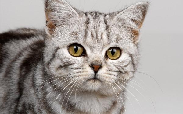 Синусит у кошки