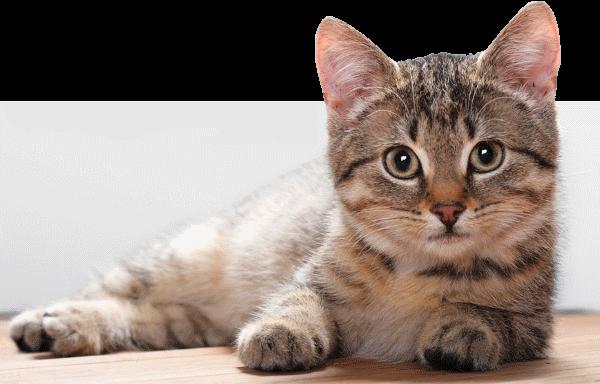 Отек легких у кошки