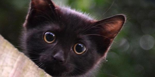 Как поставить очистительную клизму кошке?