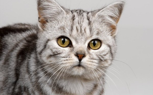 Болеет кошка – болеет хозяин