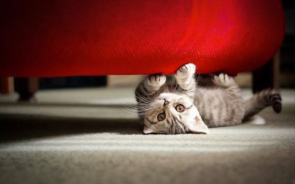 инъекции кошке