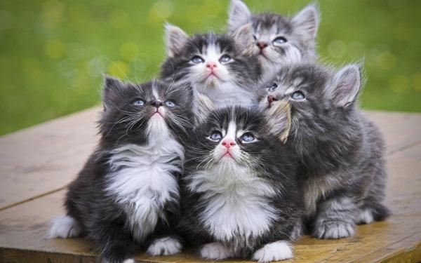 Роль витаминов в обмене веществ кошки