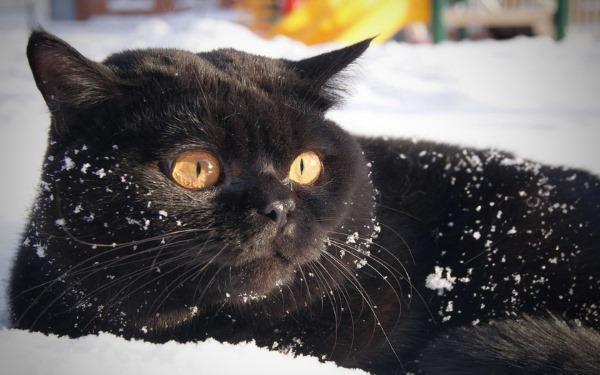 Обморожение и переохлаждение у кошки