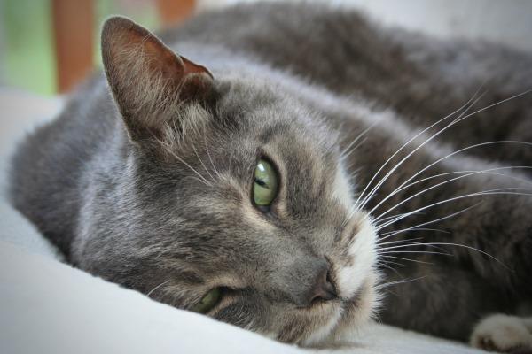 Отравления у кошек