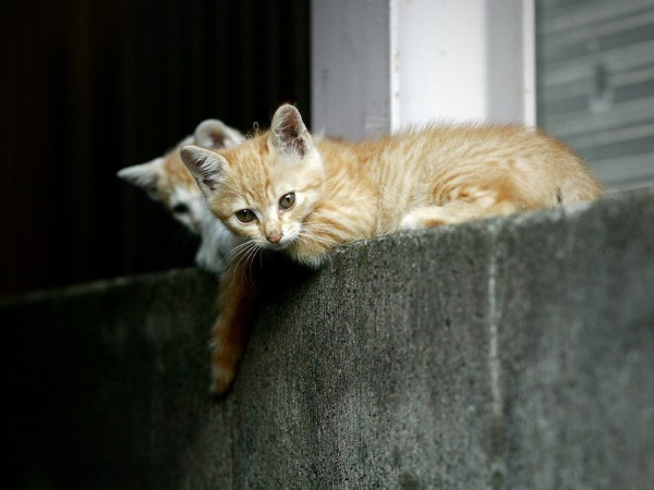 Растения, опасные для здоровья кошки