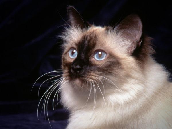 Шок у кошки